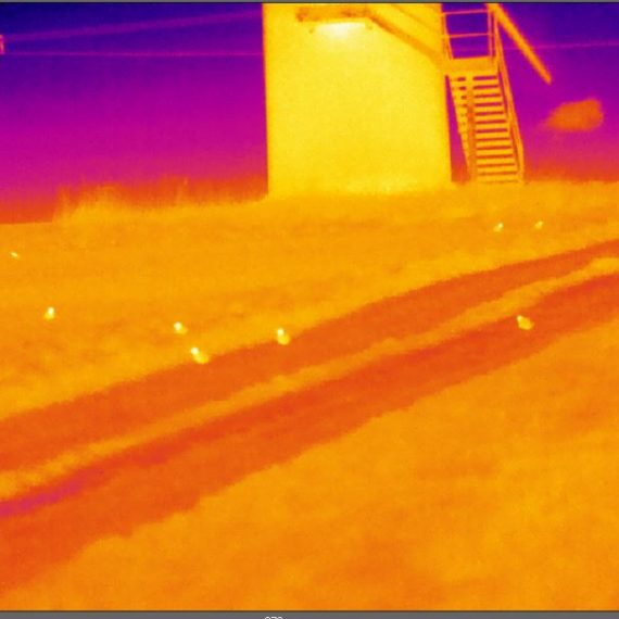 Thermal Image of golden plover underneath a wind turbine
