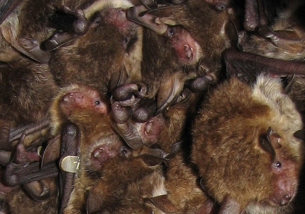 New Bat Survey Guidance For Wind Farms What Does It Mean Bsg Ecology