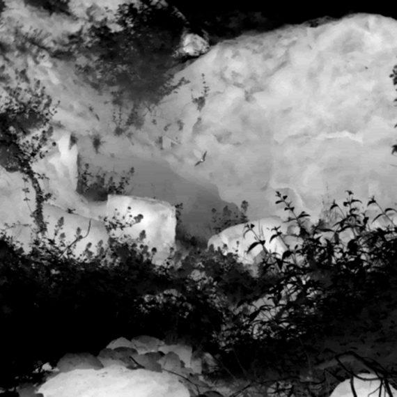 Greater Horseshoe Thermal Image