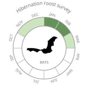 Bats_Hibernation roost survey-02