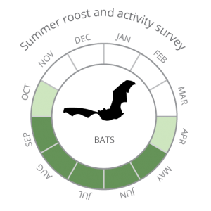 Bats_Summer roost and activity survey-02
