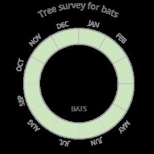 Bats_Tree survey-02