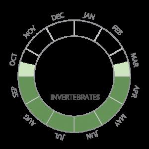 Invertebrates-01