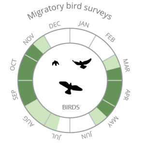 Migratory bird surveys-02