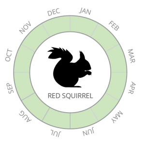 Red squirrel-01