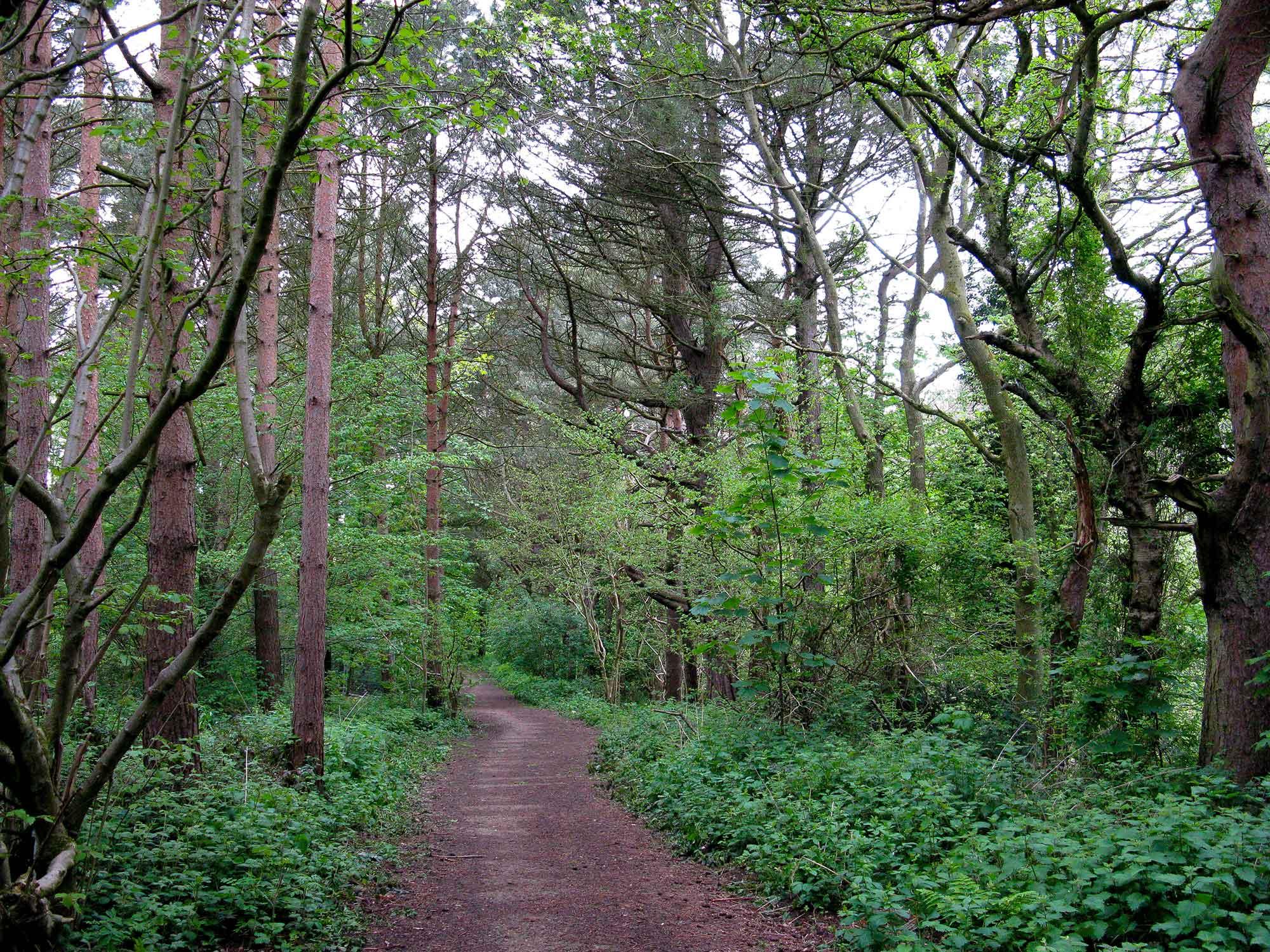 Castle Eden Dene Woodland