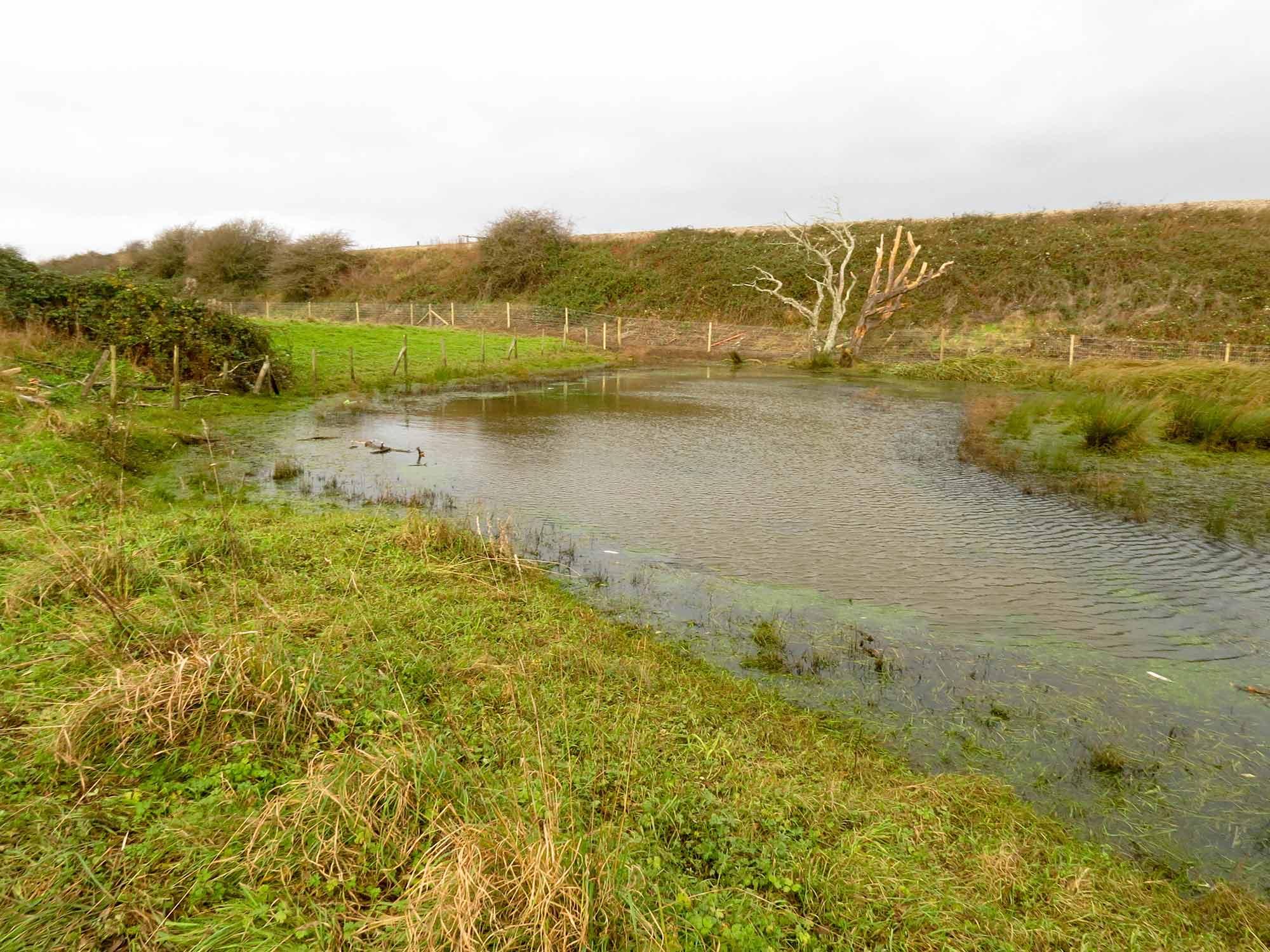 Kenfig-Industrial-Estate-Pond