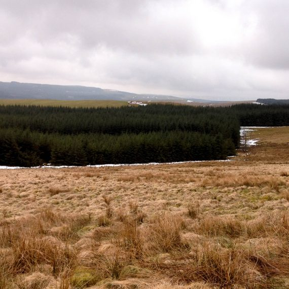 Llanbrynmair wind farm site