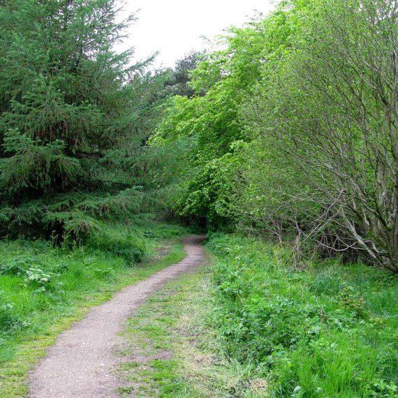 Woodland-at-Castle-Eden-Dene