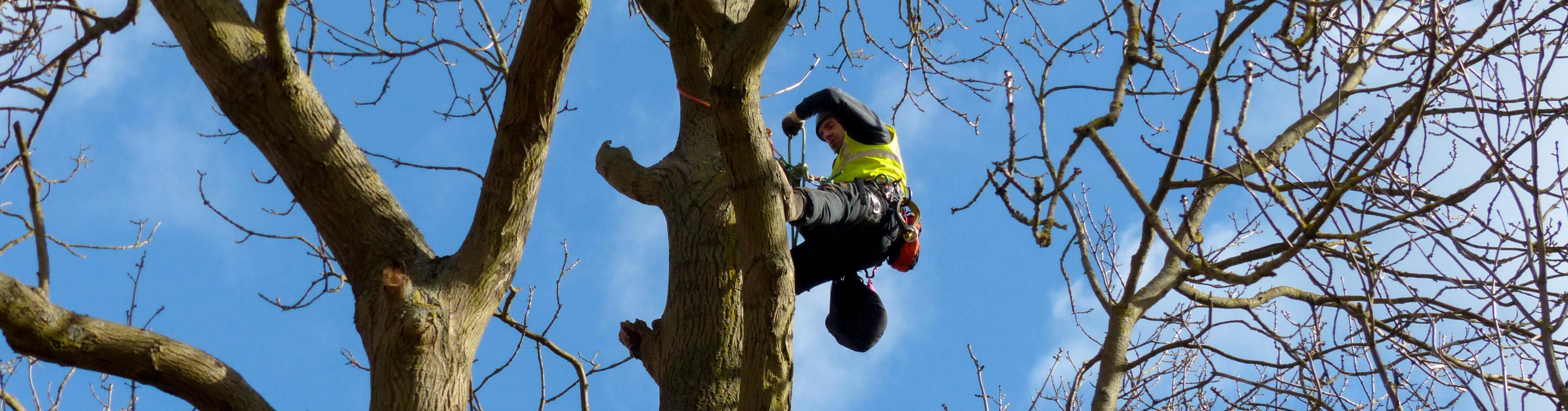 Tree Survey for Bats