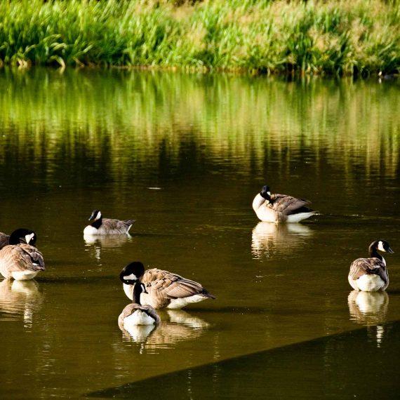 walthamstow wetlands  ornithological survey  design inputs  u0026 hra support