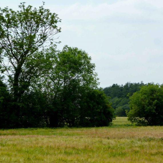 Manor-Farm