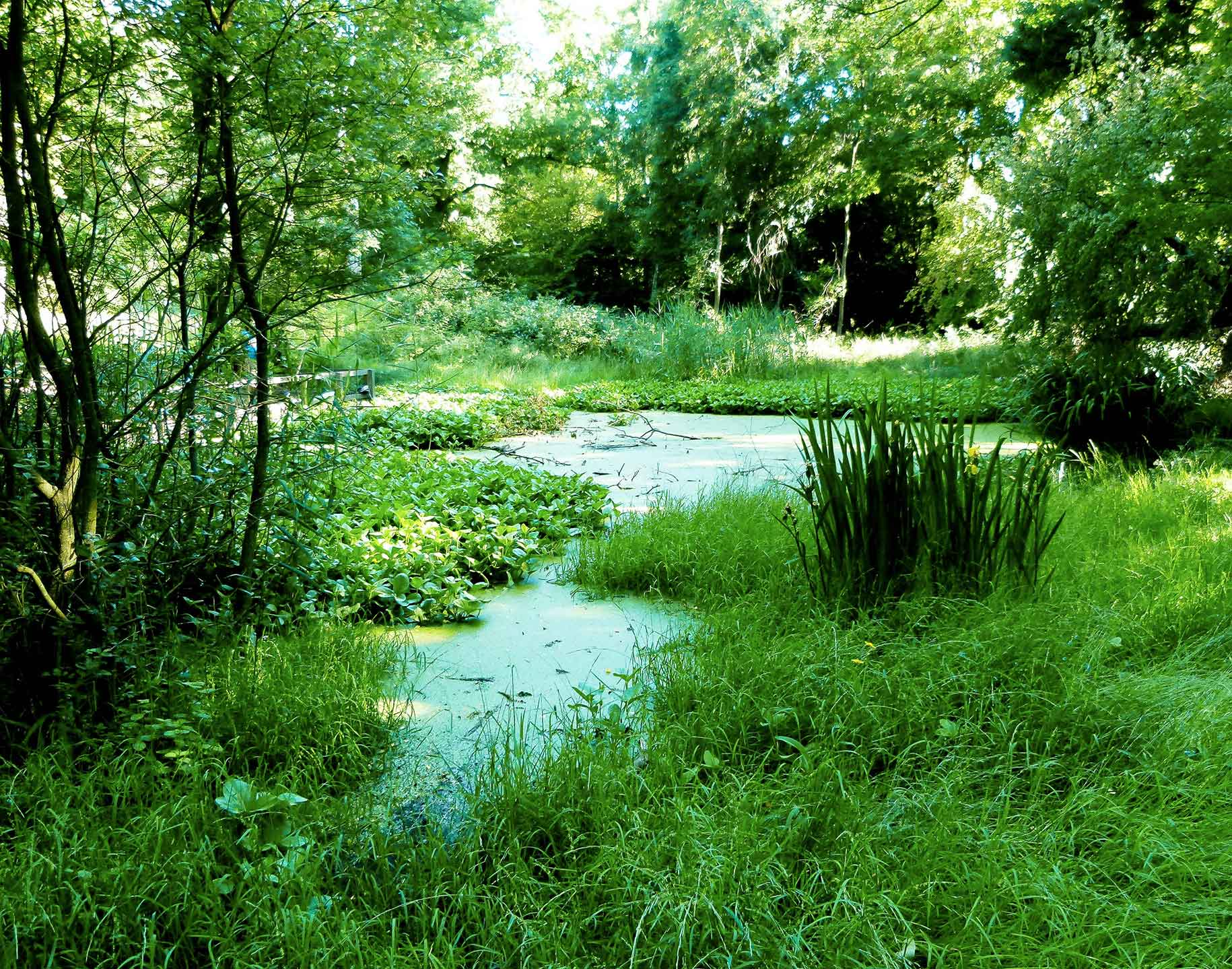Pond on the Ashridge Estate
