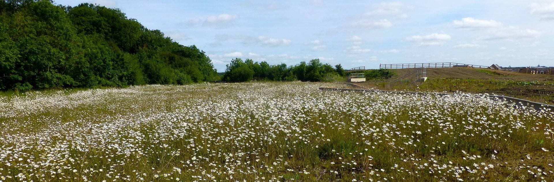 Net Gain and Biodiversity Offsetting